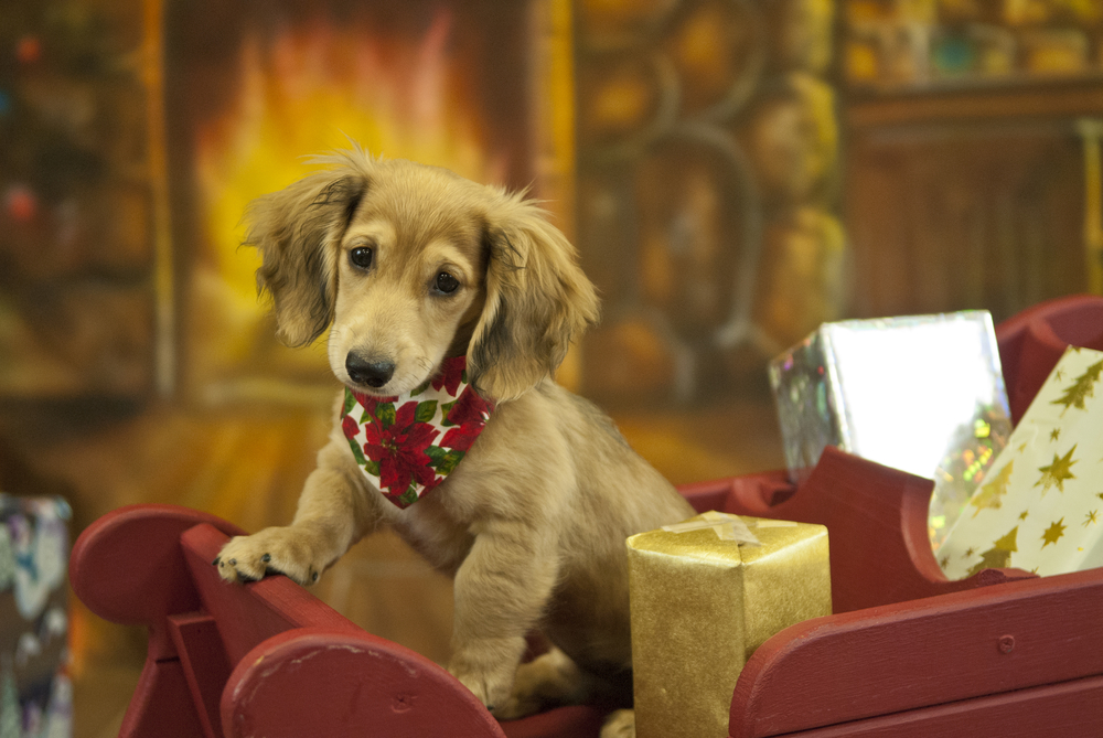 12 Dashing Dogs to Brighten Your Christmas Spirit